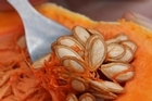 Propagating pumpkin seeds and those from French beans for replanting is a great way to save money, and grow the healthiest crops. Photo / Supplied