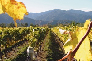 Marlborough will get major exposure not only for wines but also tourism. Photo / Supplied