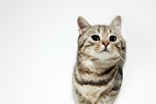 PETA is offering a free vasectomy in an effort to encourage people to neuter their pets. Photo / Thinkstock