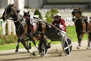 Bettor Cover Loverhas more important assignments on her programme than tonight's lowly $6000 event . Photo / Greg Bowker