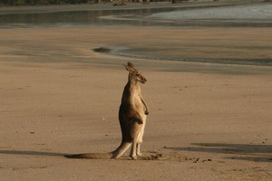The Aussies are at a bit of a loss about what to do if visitors stay away. Photo / Jim Eagles