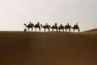 Tourists take a sunrise camel ride. Photo / Kirsty Dermer