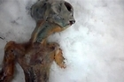 A video clip posted on Youtube shows what is claimed to be an alien in the snow. Photo / Supplied