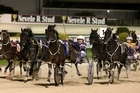 Smoken Up holds off Themightyquinn to score a gallant win in the Interdominion Grand Final.  Photo / Natalie Slade