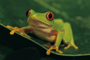 You have to kiss a few frogs to find a prince. Photo / Thinkstock
