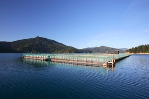 New Zealand King Salmon's farming operations in Marlborough employ around 440 people. Photo / Supplied