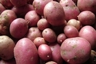 Even seasoned gardeners have had a rough year growing potatoes, so it may just be a poor growing season. Photo / Supplied