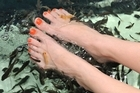 Fish foot spa. Photo / Thinkstock