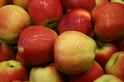 Apples led the charge as the first of the new season's crop reached Northern Hemisphere markets. Photo / Thinkstock