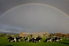 Chinese companies are keen on investing in dairy farms in New Zealand. Photo / Sarah Ivey
