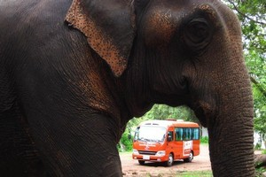 Laos is known as 'the land of a million elephants'. Photo / Supplied