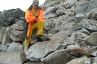 DoC Biodiversity Programme Manager Phil Bradfield looks over two of the seals massacred on the Kaikoura coast in December. Photo / Supplied