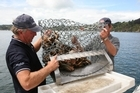 Bruce Duncan, left, and his mate celebrate the opening of scallop season. Photo / Supplied