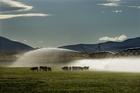 A pivot waters a McKenzie basin farm. Photo / David White