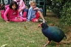 Kids can delight in the curious wildlife and wide open spaces of Tiritiri Matangi. Photo / Supplied