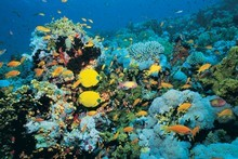 Noise pollution is altering the swimming patterns of certain marine species. Photo / Thinkstock