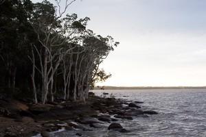 Lake Cootharaba.