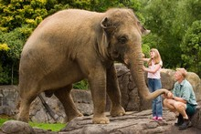 Burma has been the only elephant at Auckland Zoo for nearly two years, but is about to get some new company.