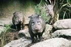 Photo / Wellington Zoo.