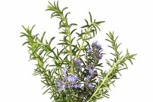 Rosemary has many uses. Photo / Thinkstock