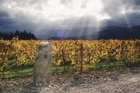 In an organic winery such as Seresin Vineyard in Marlborough, as little as possible is added to the wine. Photo / Supplied