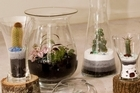 Mexican-born Luzette Godinez creates terraniums from her home. Photo / Babiche Martens