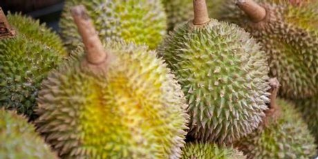 Durian fruit smells like sewers and tastes like microwaved socks. Photo / Derek Cheng