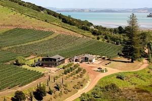 Poderi Crisci Vineyard on Waiheke Island. Photo / Supplied