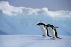 Internet access is Antarctica is understandably problematic. Photo / Thinkstock