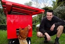 One of Justin's 'girls', Justine, checks out her new chicken tractor. Photo / Natalie Slade