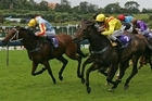 From next March there may be no more winter Sunday thoroughbred meetings in New Zealand. Photo / NZHerald