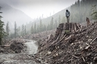 'If a Tree Falls' documents the story of the Earth Liberation Front. Photo / Supplied