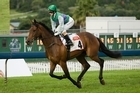 Trainer fears Capecover may be running out of steam a month short of the Grand National Hurdle.  