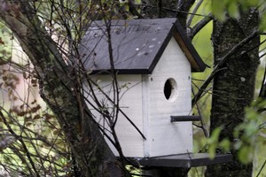 A home for your feathered friends. Photo / Doug Sherring