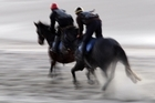Wellington Hurdles runner Seeking The Silver (right) gets in some beach practice for a heavy Trentham track on Saturday.