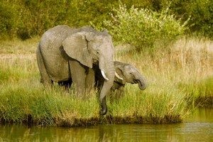 Elephants of the Kapama Private Game Reserve, South Africa. Photo / Supplied
