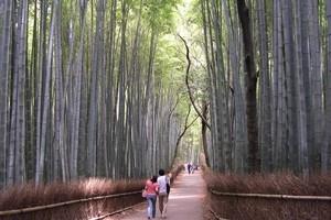 Bamboo forest at Tenru-ji. Photo / Jim Eagles