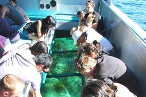 The glass bottom boat at the Goat Island Marine Reserve affords great views of aquatic life without having to get wet. Photo / Supplied