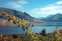 Lake Hawea. Photo / Steven Russell