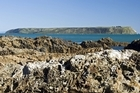 Rescuers are searching from Rocky Point to Pukerua Bay and out to Mana Island (pictured). Photo / Wairarapa Times-Age