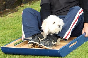 Greig's toboggan is big enough for a parent and child - or a handyman and a bemused pooch named Dude. Photo / Janna Dixon