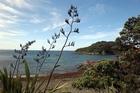 Goat Island Marine Reserve. Photo / Janna Dixon