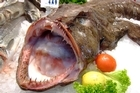 South Korea imports 19,000 tonnes of monkfish a year.