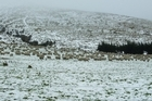 Sheep farm in Otago. Photo / Otago Daily Times