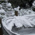 Trampoline collapsed under the weight of the snow, Blue Mountains, Upper Hutt. Photo / Marian Steele