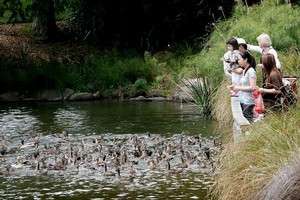 Stop for a picnic, feed the ducks and admire the flora at the Botanic Gardens, Manukau. Photo / Greg Bowker