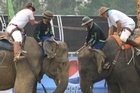 Elephants go trunk to trunk at the King's Cup Elephant Polo Tournament. Photo / Carol Stevenson
