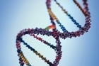 One in every 11 women who carry a particular faulty gene is likely to develop ovarian cancer at some point in her life, a study has found. Photo / Thinkstock