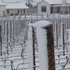 Our vineyard in Te Muna Road, Martinborough, this morning. 15cm of snow, still snowing at 11.30. No power, no water, no heating. Photo / Deborah Coddington
