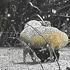 Sheep feel the winter chill in Tutamoe, Dargaville. Photo / TL Morgan